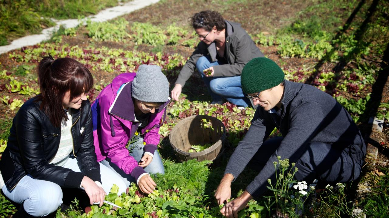 Group of people picking vegetables in garden