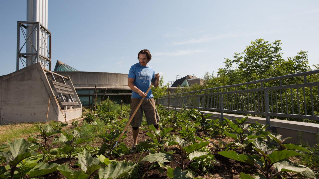 Trent university rooftop garden.