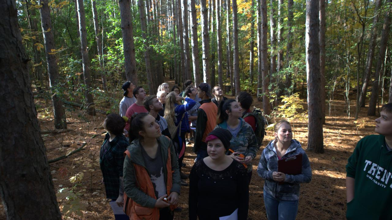 A group of students in a forest
