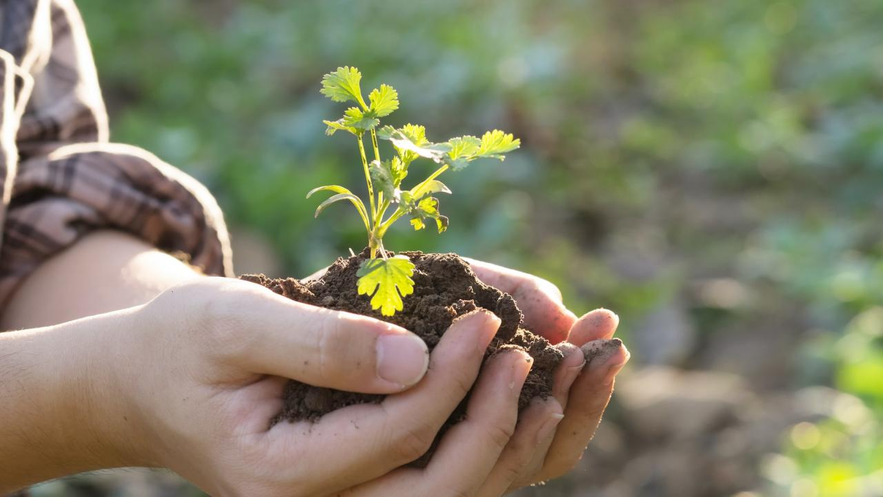 Hands holding soil with a plant in it.