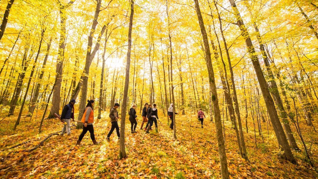 Trent students explore on-campus nature areas