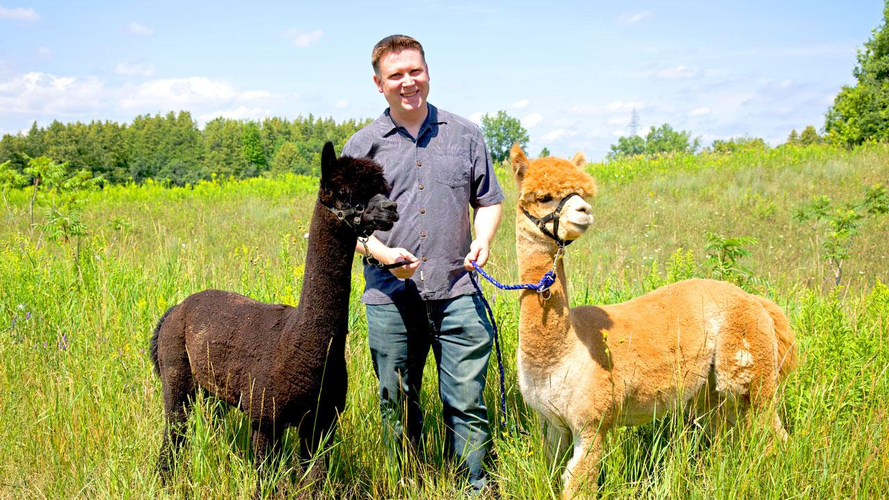 Jason Allen, manager of Animal Care at Trent with Ozzy and Goose the alpacas.