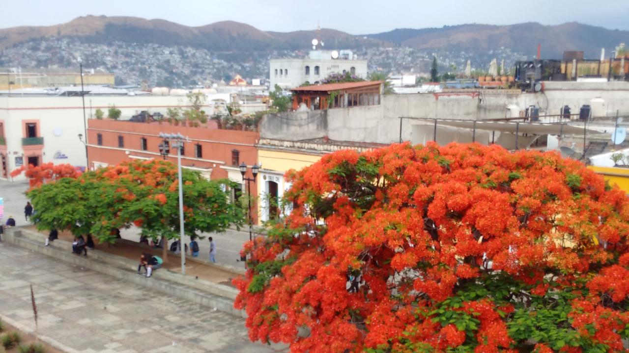 Oaxaca city in Mexico with mountains in background and city landscape
