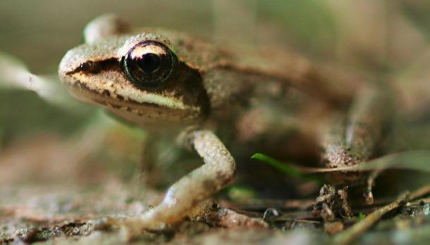 Frog in wilderness