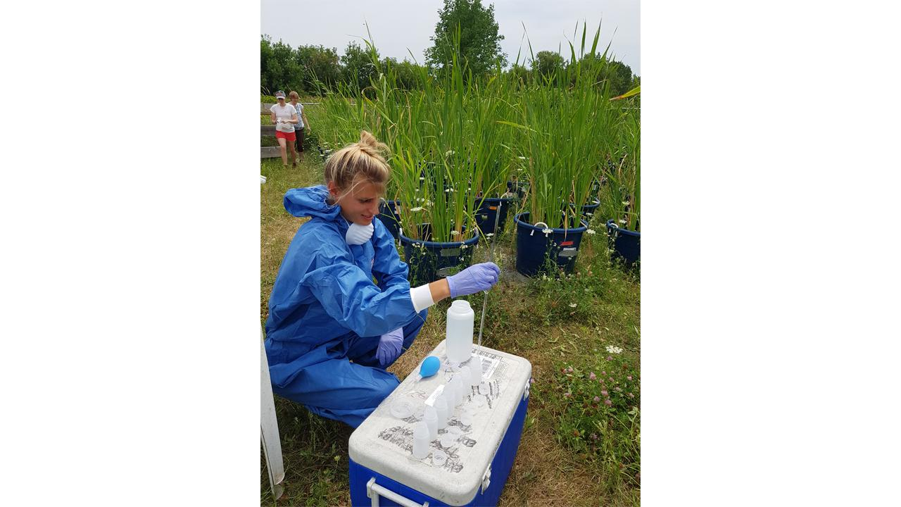 Verena Sesin, a Trent Environmental and Life Sciences Ph.D. student, uses University land to research the effects of pesticides. Along with a greenhouse, Trent offers a very large natural area that includes multiple terrestrial and freshwater ecosystems for research.