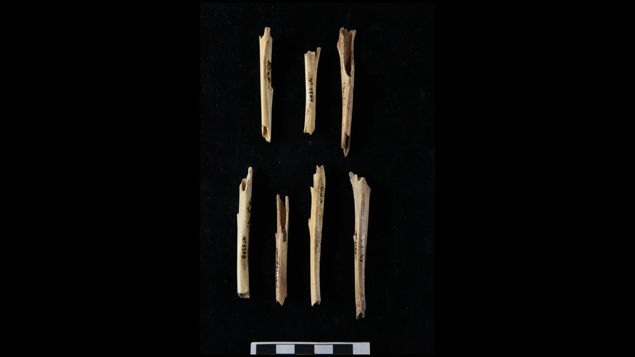 Fragments of rabbit bone.