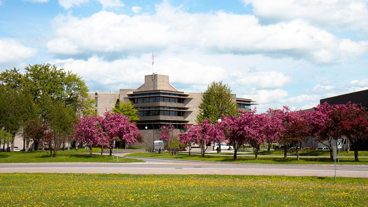 Cherry blossoms in bloom outside of Bata Library