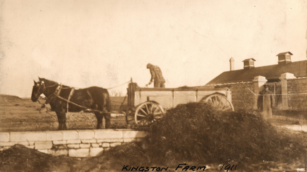 old photo of man standing on horse drawn wagon in Kingston 1911